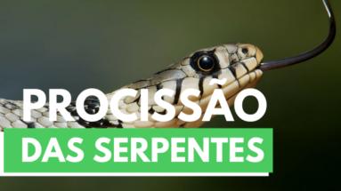 9 2 383x215 - Procissão das serpentes